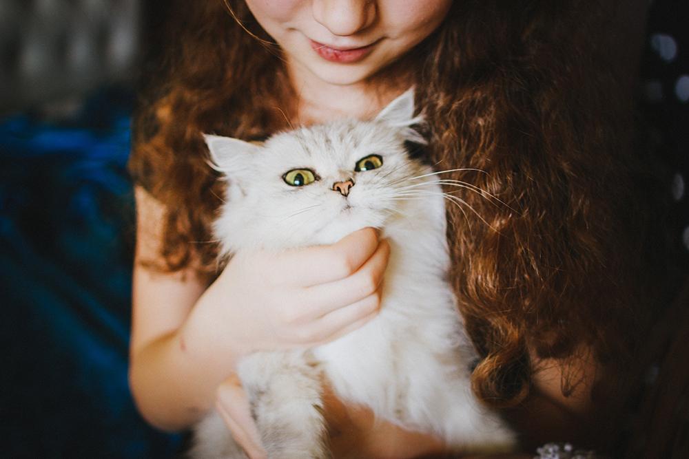 Child petting agitated cat