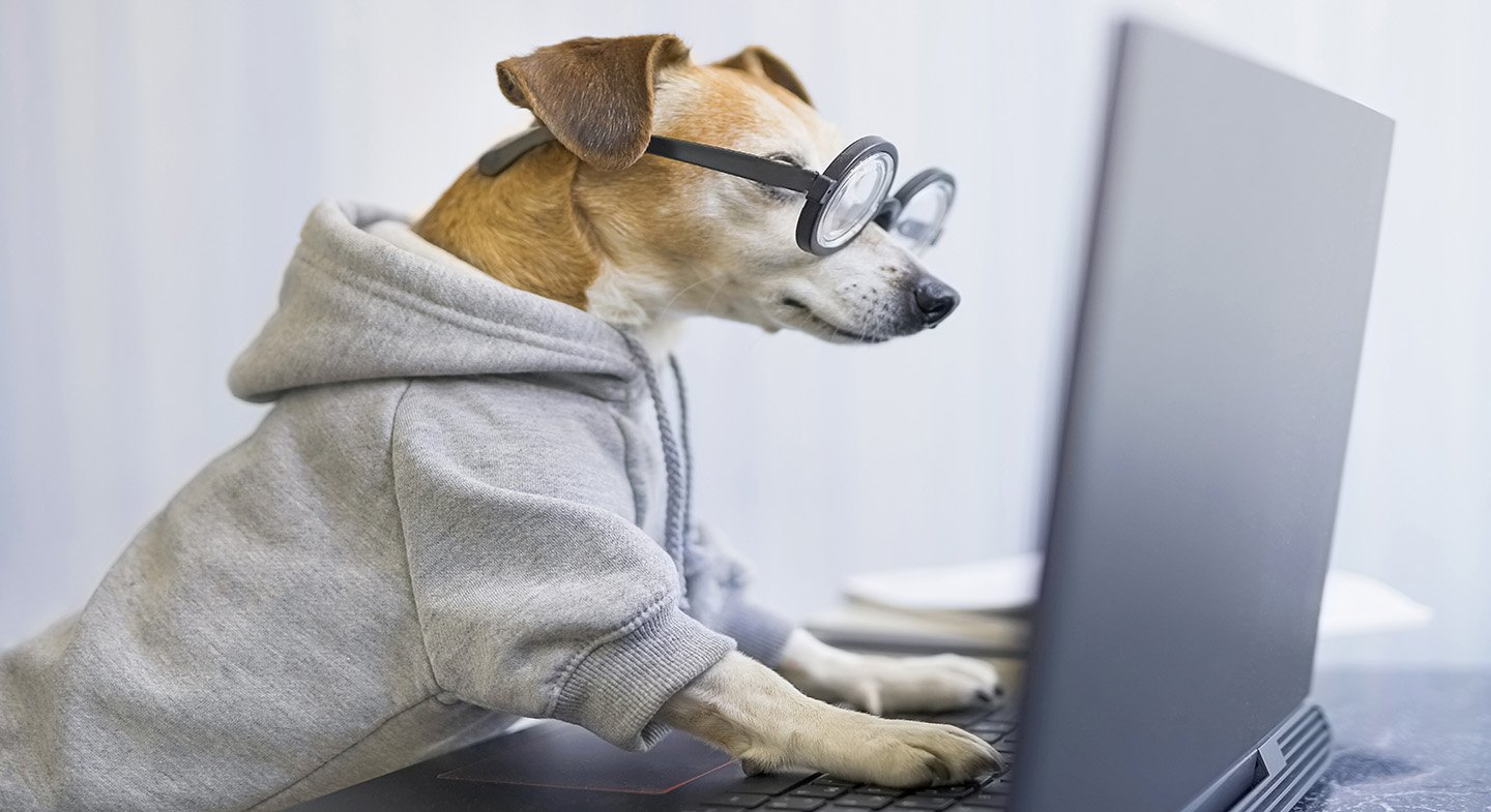 Smart working dog using computer typing on laptop keyboard. Desi